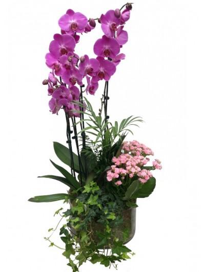 Centros de orquídeas con plantas variadas. DISPONIBLE SOLO PARA MADRID