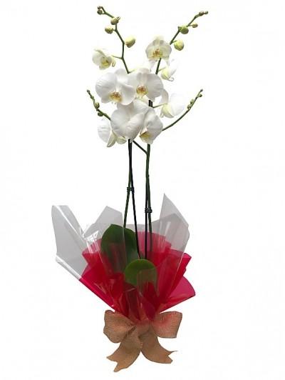 1 Orquidea blanca decorada