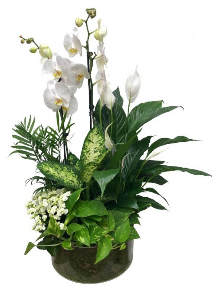 centro de orquideas blancas plantas variadas