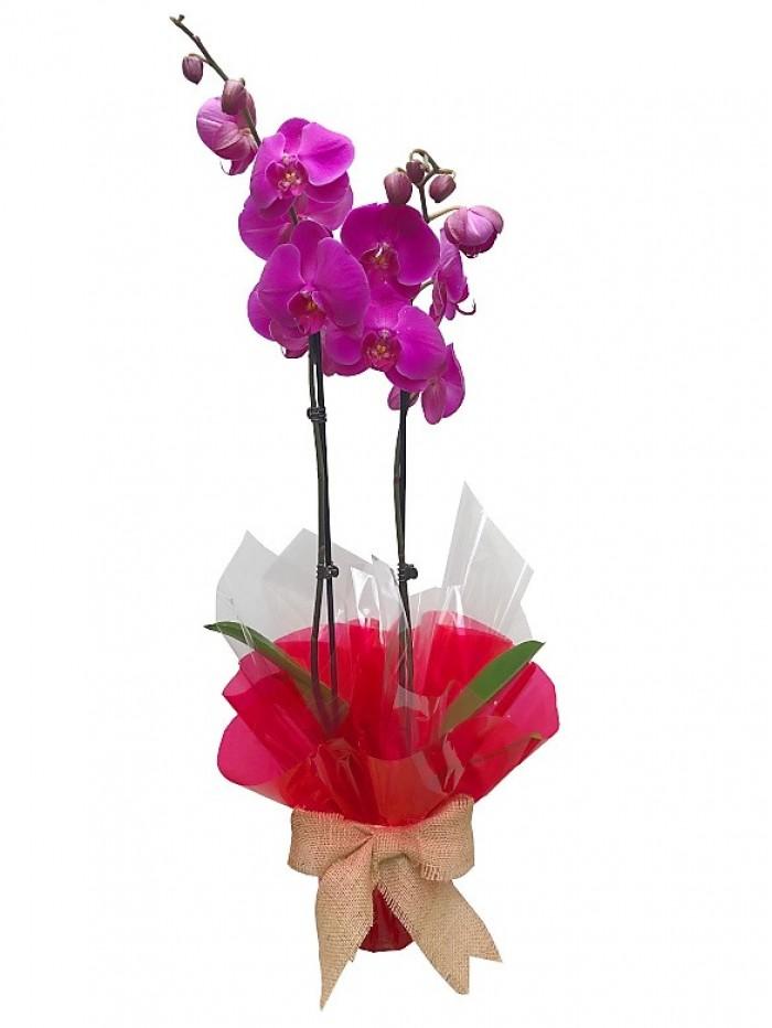 1 Orquidea morada San Valentin