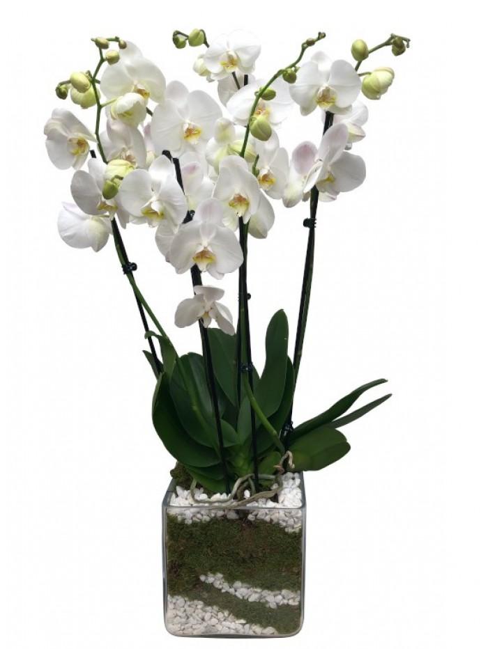 Centro de orquideas blancas con piedras