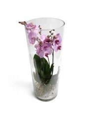 Centro de dos orquideas rosas en cilindro