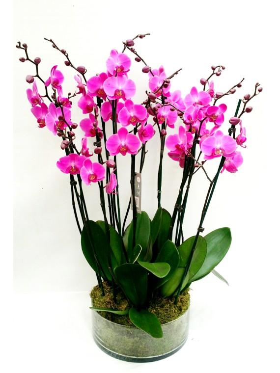 Centro de 5 orquideas moradas