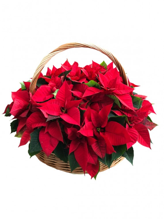 Cesta campana de flores de pacua XXL. DISPONIBLE SOLO PARA MADRID