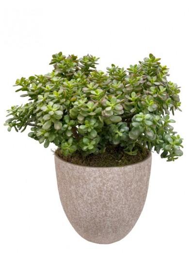 Flor de pascua en cesta