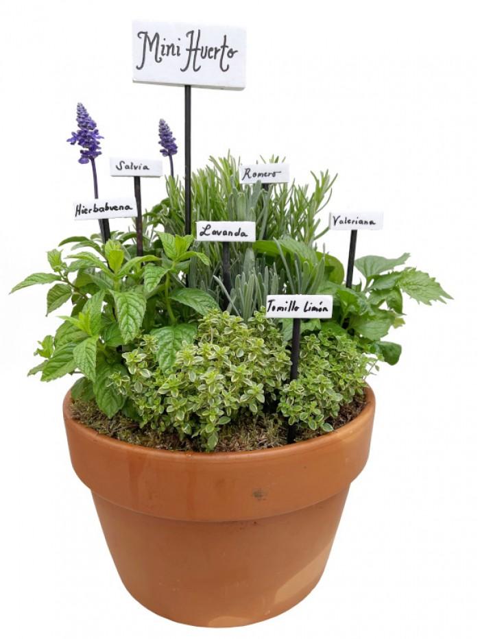 Centro de seis plantas aromáticas cerámica