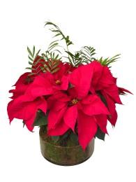Centro navideño de plantas variadas