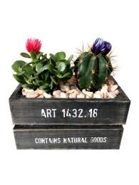 Centro de dos cactus