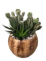 Centro de cactus en maceta decorativa