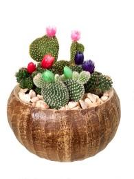 Centro de cuatro cactus maceta decorativa