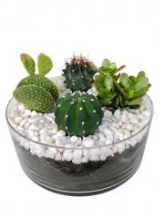 Centro de cuatro cactus