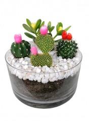 Centro de cuatro cactus flor