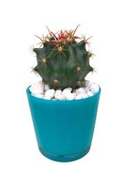 Cactus M8.50 en cristal