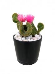 Cactus flor en cristal