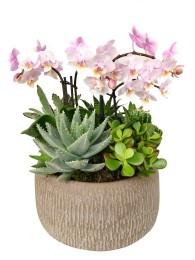 Centro de cactus con orquideas