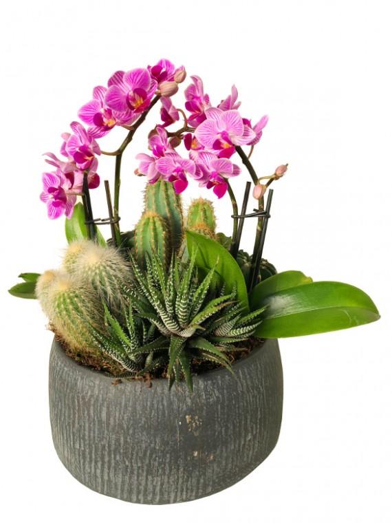 Centro de cactus mini orquideas