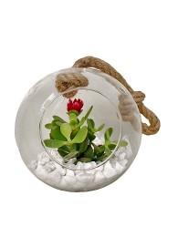 Bola de cristal con mini cactus flor
