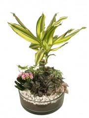 Centro de mesa con  Plantas 1