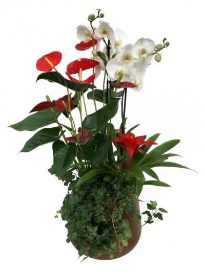 Centro de anthurium con orquidea