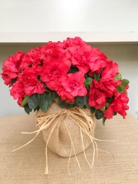 Azalea roja en arpillera