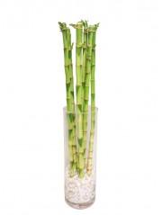 Composicion de tallos de bambu en cristal