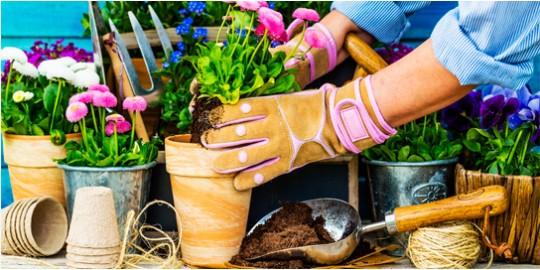 Cuidado de plantas en primavera