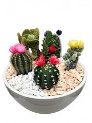 Centro de cactus fror ceramica