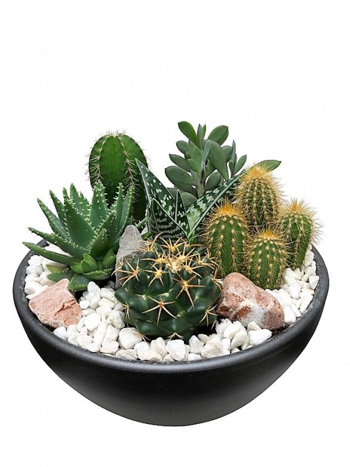 Centro de cactus ceramica