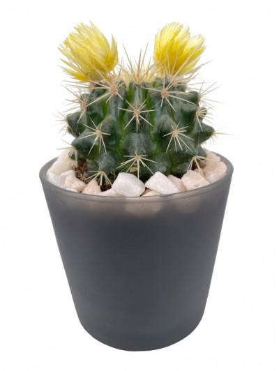 Cactus flor en cristal gris