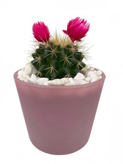 Cactus flor en cristal rosa