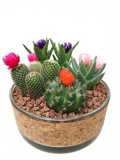 Centro de cuatro cactus flor en cristal