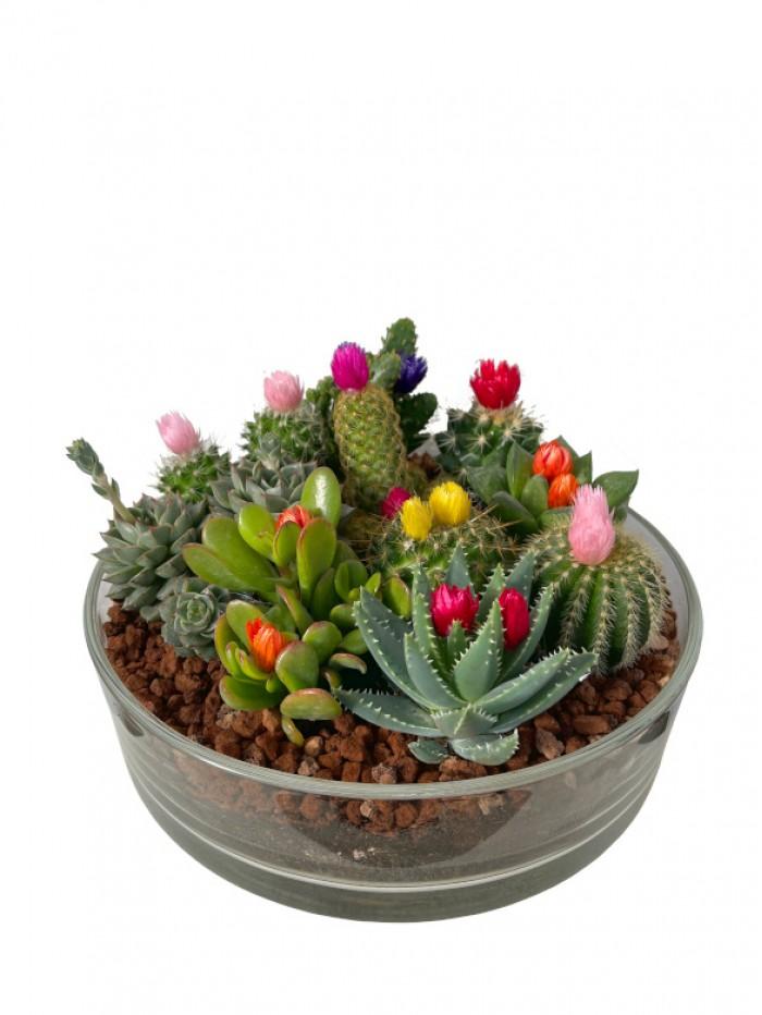 Centro de  cactus  flor en cristal redondo
