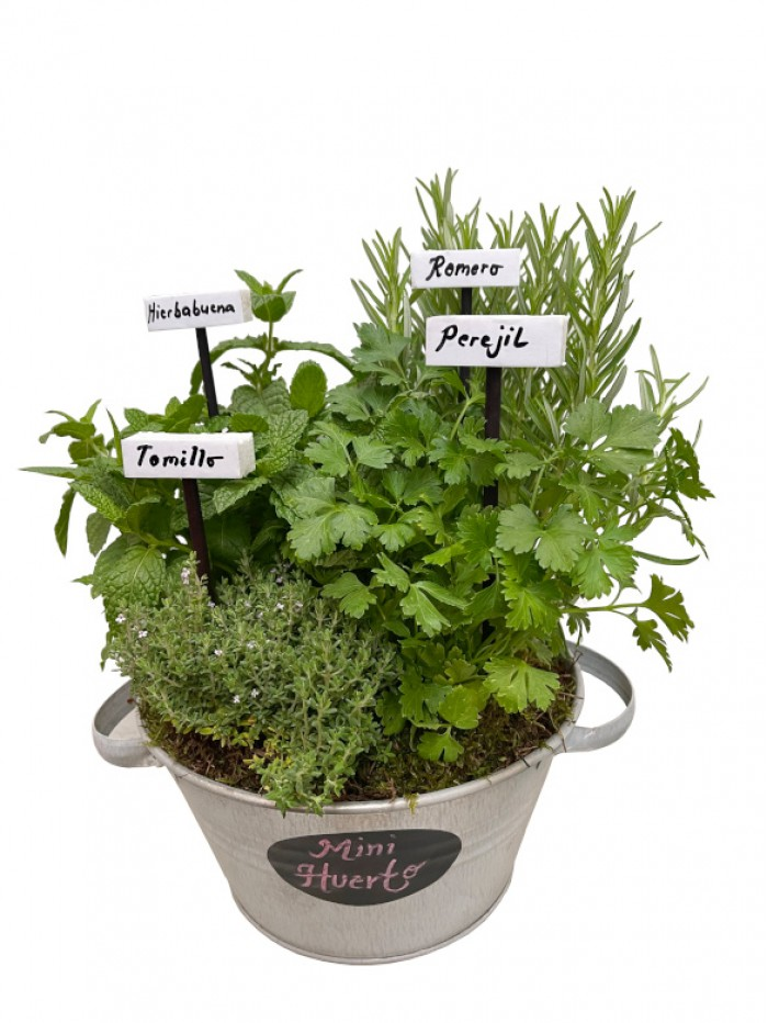 Centro de cuatro plantas aromáticas laton