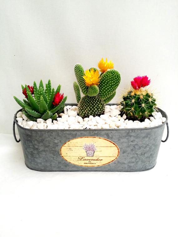 Centro de cactus flor en laton