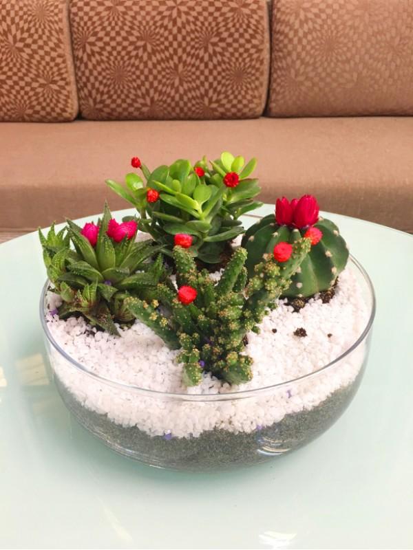 visita nuestros centros de cactus y plantas crasa con