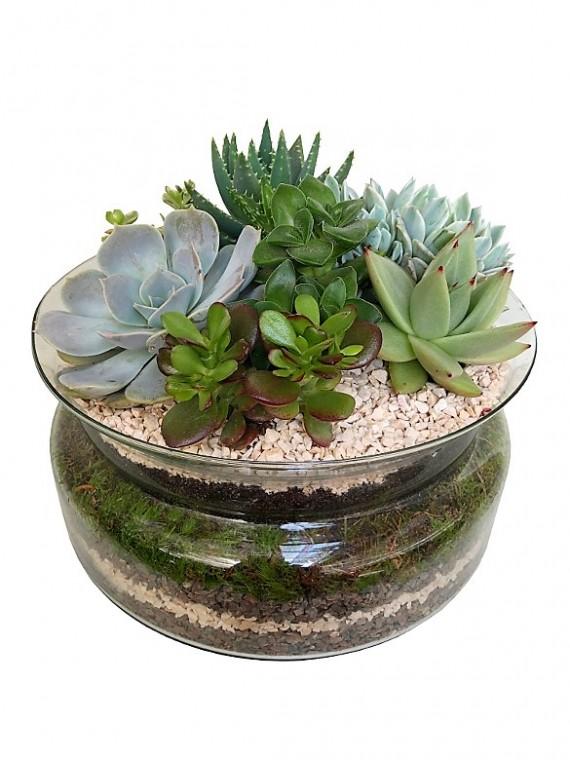Centro de  plantas crasas en cristal 25 CM
