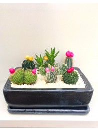 Centro de cinco cactus flor en ceramica