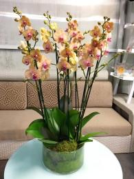 Centro de cuatro orquideas anaranjadas en cristal
