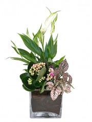 Centro de mesa con Spathiphyllum