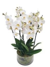 Centro de cuatro orquideas blancas en cristal