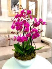 centro de 4 orquideas moradas en ceramica