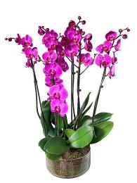 centro de 3 orquideas moradas