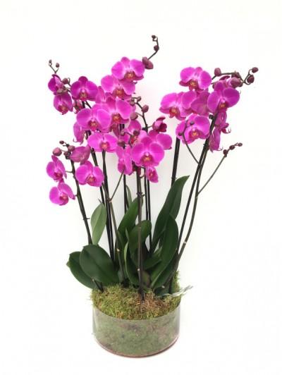 centro de 4 orquideas moradas