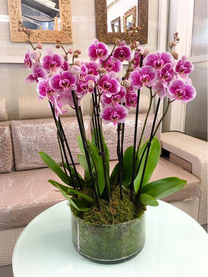 Centro de 5 orquideas rosadas