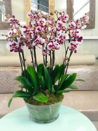 1 Centro de  orquideas originales en cristal