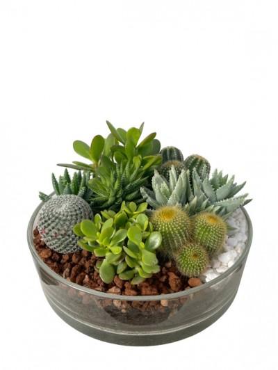 Centro de  cactus en cristal 35cm