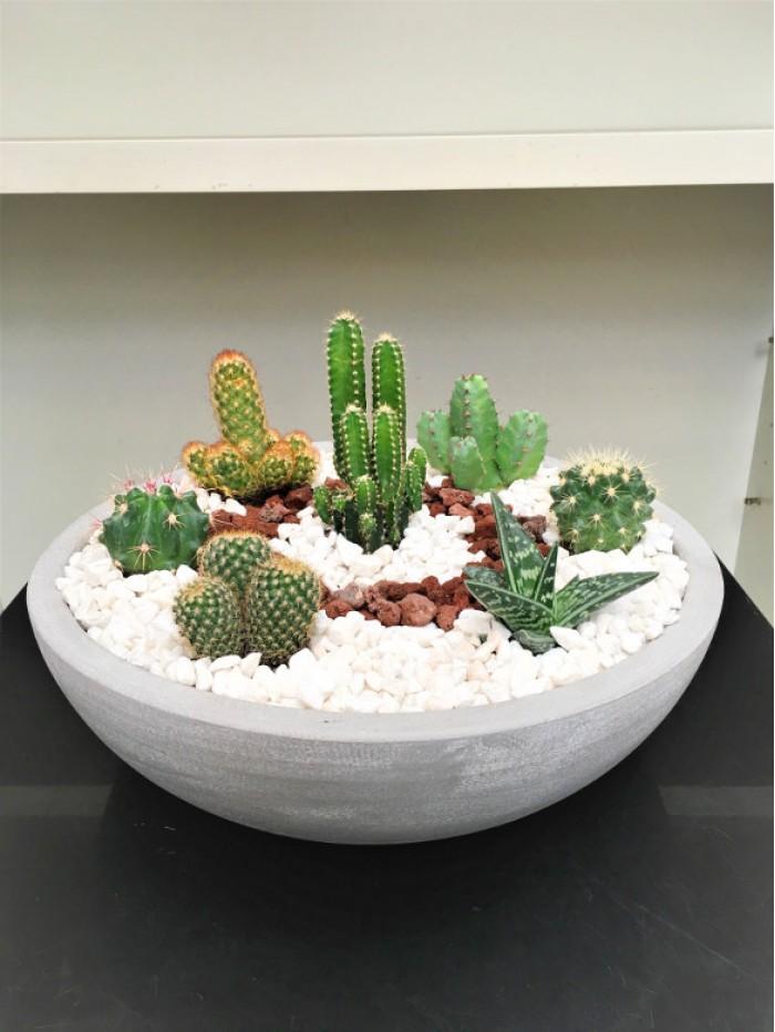 Centro grande de cactus