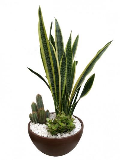 Sanseviera con cactus ceramica marron