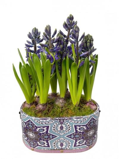Cesta de jacintos azules