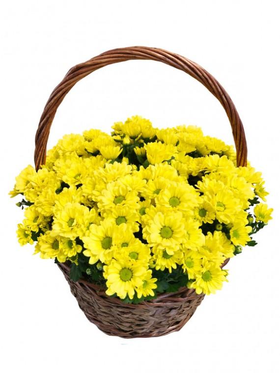 cesta de cinco margaritas amarillas